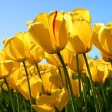Velikonoční provozní doba !