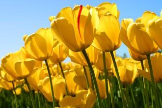 SVÁTKY   květen